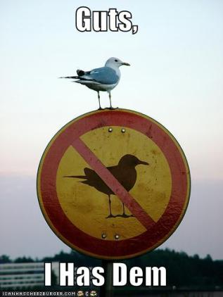 funny-pictures-bird-anti-bird1.jpg