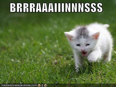 lol-cats-brraains.jpg