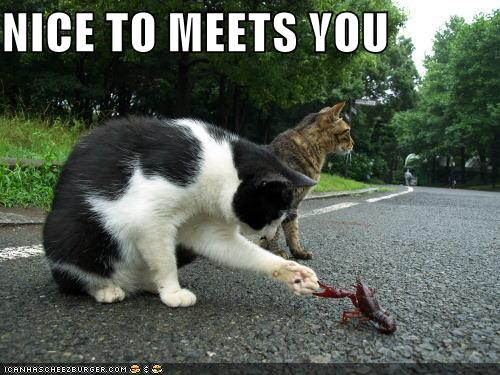 Lol cats jessie x - Funny animal pictures with words ...