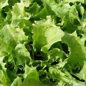 pureed-lettuce