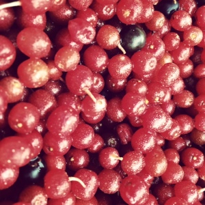 Autumn berries! And a few wild grapes found along the way.
